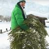 Hand-Delivered Fraser Fir Christmas Tree