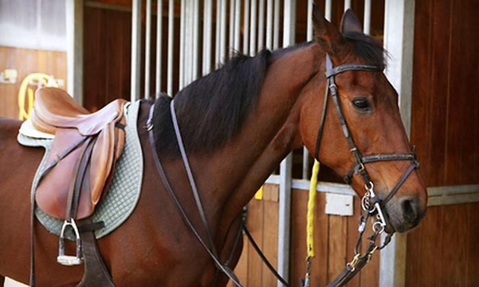 Lonesome Pine Equestrian Center - Lubbock: One or Three Horseback-Riding Lessons at Lonesome Pine Equestrian Center (Up to 57% Off)