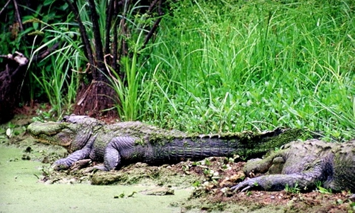 Cajun Country Swamp Tours - Baton Rouge: $20 for Two Adult Tickets for a Swamp Exploration from Cajun Country Swamp Tours ($40 Value)
