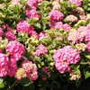 Half Off Trees, Shrubs, and Plants