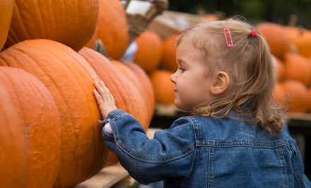 Corn-Maze Admission & Tractor Rides to Pumpkin Patch for 2, 4, or 6 at The Wright Family Farm (Up to 56% Off)