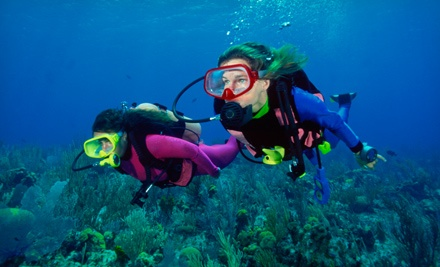 $129 for a PADI Open-Water Scuba-Certification from Tropical Adventures Scuba and Travel ($424 Value)