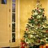 Half Off Natural Christmas Trees