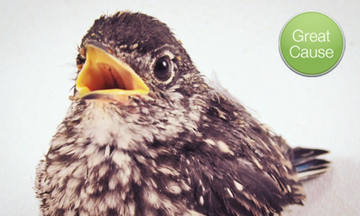 Wildlife Rehabilitation Center of Minnesota - Minneapolis / St Paul: If 50 People Donate $10, Then Wildlife Rehabilitation Center of Minnesota Can Purchase Two Weeks of Food for 75 Orphaned Birds