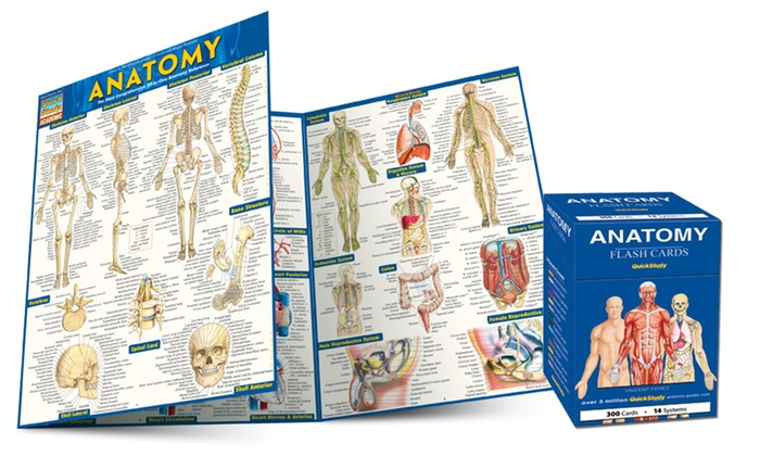Anatomy Flash Cards and Guide | Groupon Goods