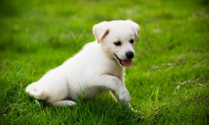 Bark University, Inc. - Mundelein: $80 for an Eight-Week Puppy Training Course at Bark University, Inc. ($160 Value)