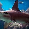 Portland Aquarium – Up to 47% Off Visit or Party
