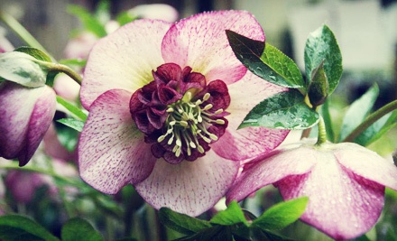 $40 Groupon for Plants - Fraser's Thimble Farm in Salt Spring Island