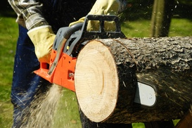 East TN Tree Service: $98 for $200 Worth of Tree-Removal Services — East TN Tree Service, Inc