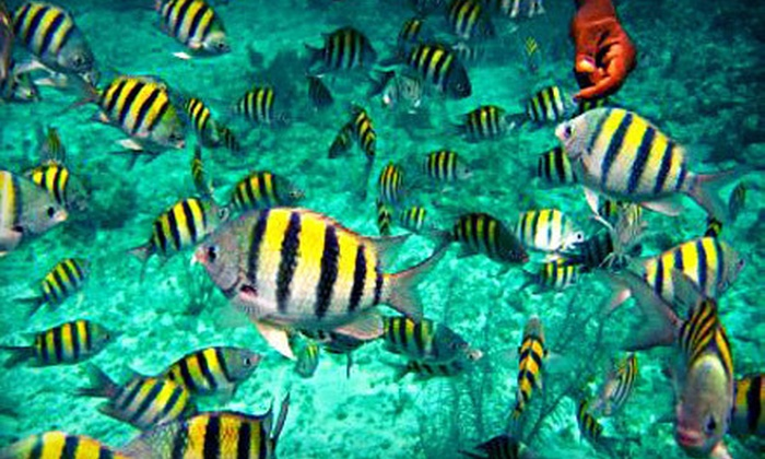 Reef Roamer and Quicksilver Catamarans - Key Largo: Morning Snorkeling Trip with Gear Rentals for One or Two from Reef Roamer and Quicksilver Catamarans (Up to 51% Off)