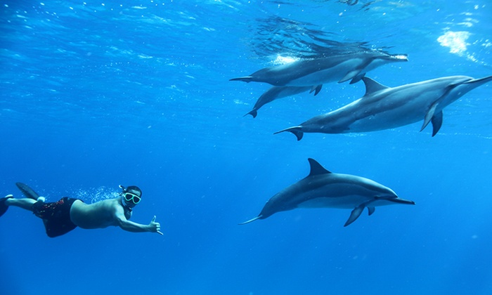 Dolphins and You - Waianae: Dolphin Swim Tour for One or Two Adults or One Child from Dolphins and You (Up to 40% Off)