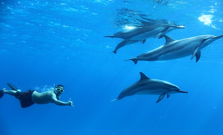 Dolphin Swim Tour for One or Two Adults or One Child from Dolphins and You (Up to 40% Off)