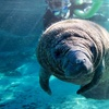 31% Off at Manatee Tour and Dive