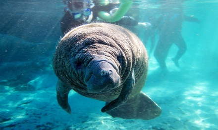Manatee Tour and Snorkel-Equipment Rental for a Child or Adult from Manatee Tour and Snorkel (Up to 59% Off)
