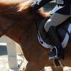 Up to 54% Off Horse-Riding Lessons in Menlo Park
