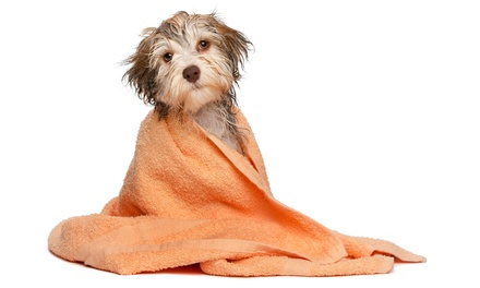 Bathing, Dental, or Wellness Package for One Dog at Atlas Pet Hospital (Up to 54% Off). Four Options Available.