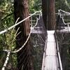 Up to 52% Off Admission to Greenheart Canopy Walkway