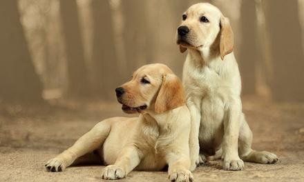 Bis zu 60 Minuten Fotoshooting für ein Haustier, optional für Tier und Halter, im Studio M (75% sparen*)