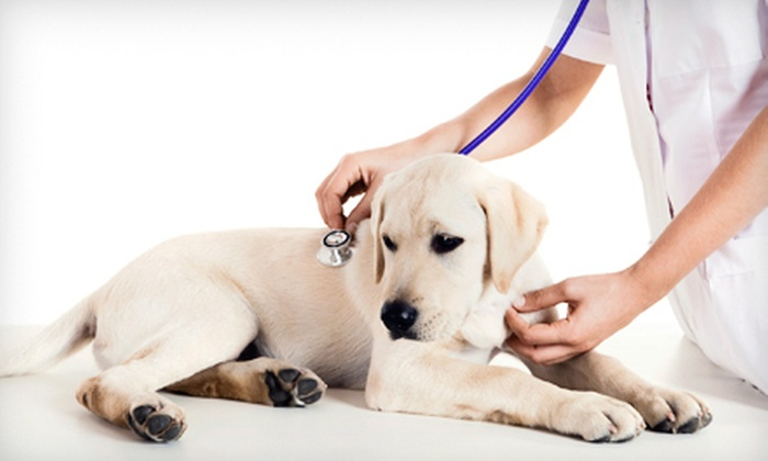 Interlachen Animal Hospital - Shoppes Of Interlachen: Vaccination with Teeth Cleaning or Microchipping Package at Interlachen Animal Hospital in Winter Park (Up to 59% Off)