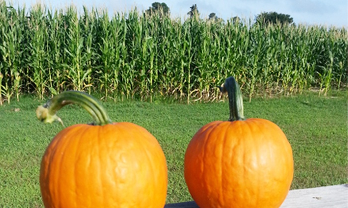 Phillips Farms of Cary - Cary: Corn-Maze Visit for Two or Four at Phillips Farms of Cary (45% Off)