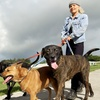 56% Off Pet Care