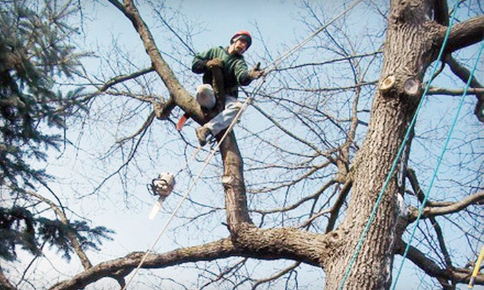 Warnke Tree Service - Troy: $75 for Three Man-Hours of Trimming and Removal Services from Warnke Tree Service ($225 Value)