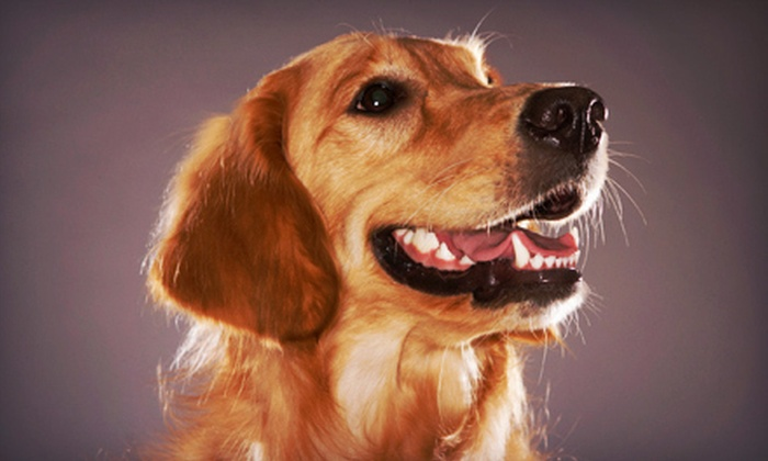Pet Vaccination Services - Multiple Locations: $25 for One-Year Canine Rabies Package and Heartworm Test at Pet Vaccination Services (Up to $50 Value)