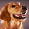 Up to Half Off Canine Wellness Package