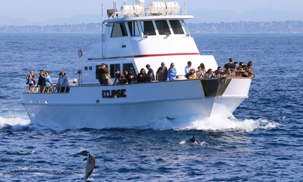 Coronado Islands Whale Watching and Nature Tour for 1, 2, or 6 from Pacific Nature Tours (Up to 47% Off)
