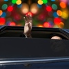 51% Off Limousine Tour of Holiday Lights