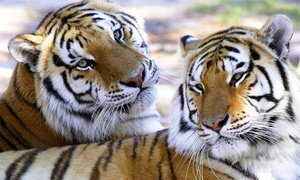 Wildlife Survival Sanctuary: Exotic Animals Walking Tour for Two or Six at Wildlife Survival Sanctuary (Up to 50% Off)