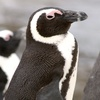 Up to 54% Off Visits to Hemker Park & Zoo