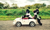 Pets Got Talent Live Finals, 19 or 20 August at Staffordshire County Showground (Up to 37% Off)