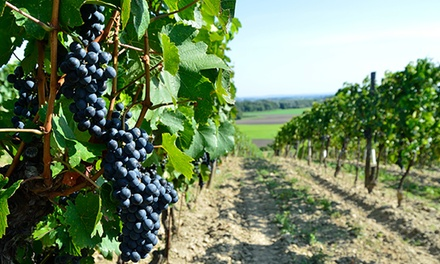 Hunter Valley Tour with Lunch for One $64 or Two People $125 with Amazing Tours Sydney Up to $300 Value