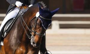 Officina equestre: 5 o 10 lezioni di equitazione di un'ora ciascuna (sconto fino a 72%)