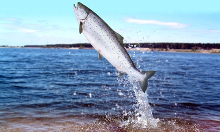 Four-Hour Fishing Trip for One, Two, Four, or Six from Puget Sound Sports Fishing (51% Off)