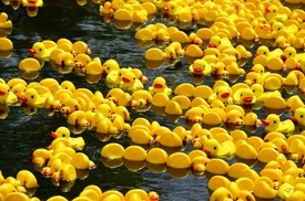 Grand River Rubber Duck Race: Grand River Rubber Duck Race and Fest on May 23–24 (Up to 54% Off). Three Options Available.