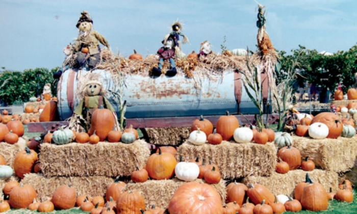 Big Horse Corn Maze - Temecula: Admission for Two or Four to Big Horse Corn Maze