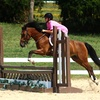 Up to 59% Off Horseback Riding Lessons in Olive Branch