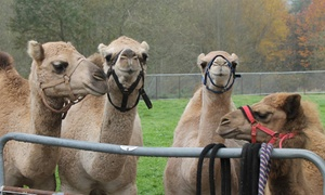 Camel Safari: Camel Encounter and Segway Tour for One or Two from Camel Safari (Up to 54% Off)