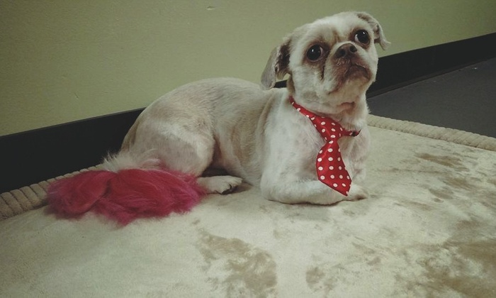 The Filthy Animal - Multiple Locations: $10 for $20 Worth of Pet Grooming — The Filthy Animal