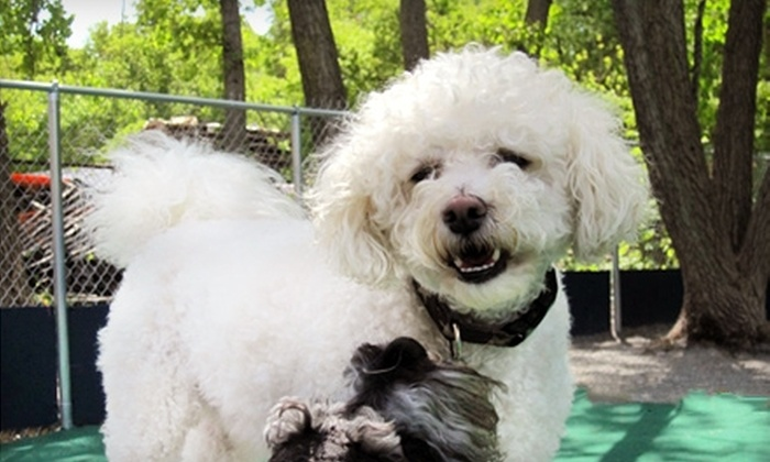 Ocean Dog Club - Pawtucket: $59 for Five Days of Doggy Daycare at Ocean Dog Club ($120 Value)
