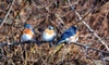 Wild Birds Unlimited - Multiple Locations: $15 for $30 Worth of Bird-Watching Merchandise and Supplies at Wild Birds Unlimited