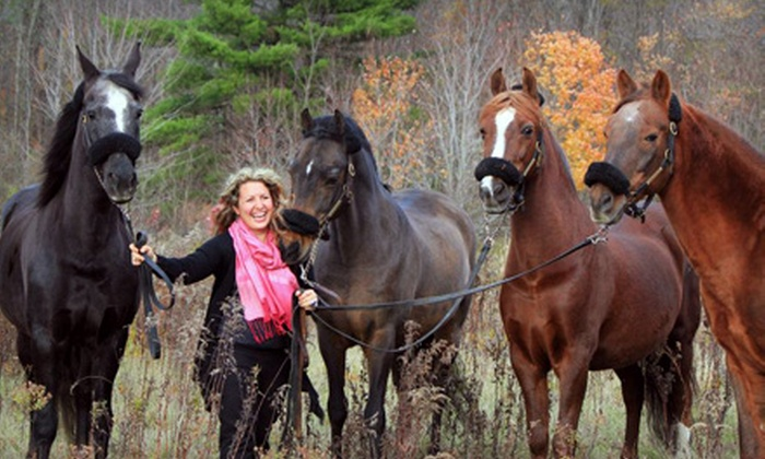 Trinity Morgan Farm - Bellevue: One, Three, or Five One-Hour Horseback-Riding Lessons at Trinity Morgan Farm in Broadalbin (Up to 75% Off)