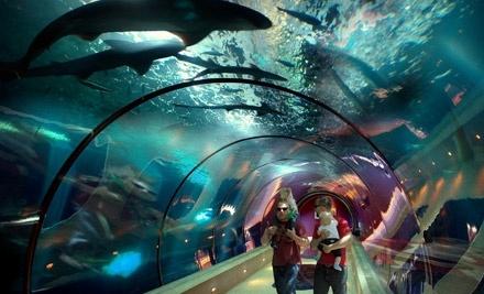 Oregon Coast Aquarium: 2 Adult Tickets - Oregon Coast Aquarium in Newport