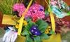Gardenland Garden Centres Inc. - Cambridge: $20 for $40 Worth of Annuals, Perennials, Nursery Stock, and Gardening Supplies at Gardenland Garden Centres