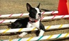 Above & Beyond Pet Care Hospital - Lubbock: $15 for $30 Worth of Pet-Resort Services at Above and Beyond Pet Care Hospital