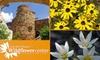 51% Off Wildflower Center Membership