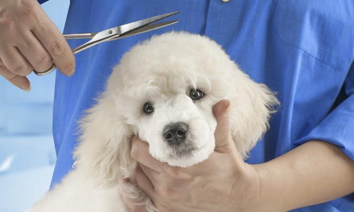 Onlinegroomingschool - Sunland: Pet Grooming Course at OnlineGroomingSchool.com (55% Off)