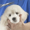 55% Off a Pet Grooming Course